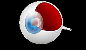 cutaway eye diagram