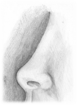 Pencil drawing of the profile of a woman's nose