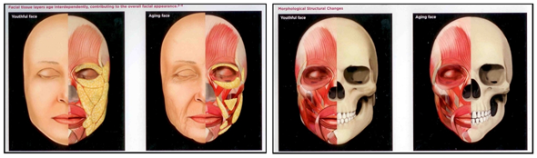 Illustration of layers of facial anatomy