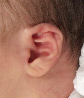 Baby Ear Folded Over Connecticut