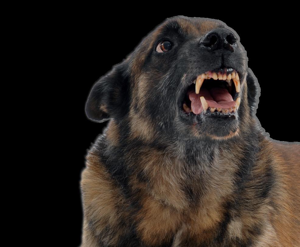 Dog Bite Lawyer - Oklahoma - The Tawwater Law Firm - Attorney