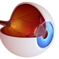 3-D illustration of inside of an eyeball's anatomy