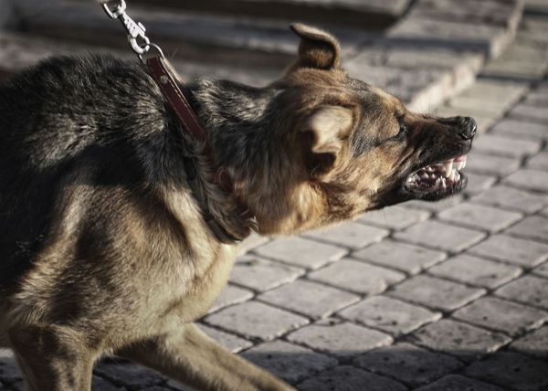An aggressive dog can't be controlled and is a public danger