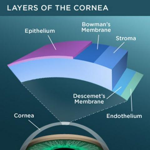 A chart showing the layers of the cornea.