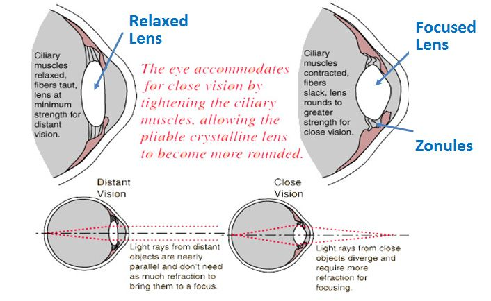 Two diagrams showing an eye with a relaxed lens and one with a focused lens.