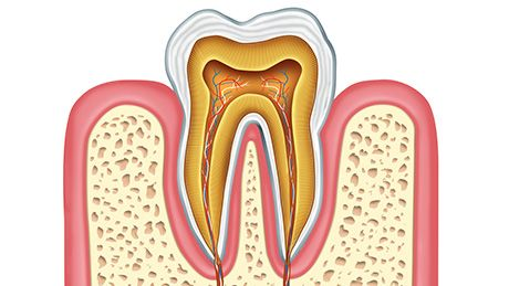 tooth roots
