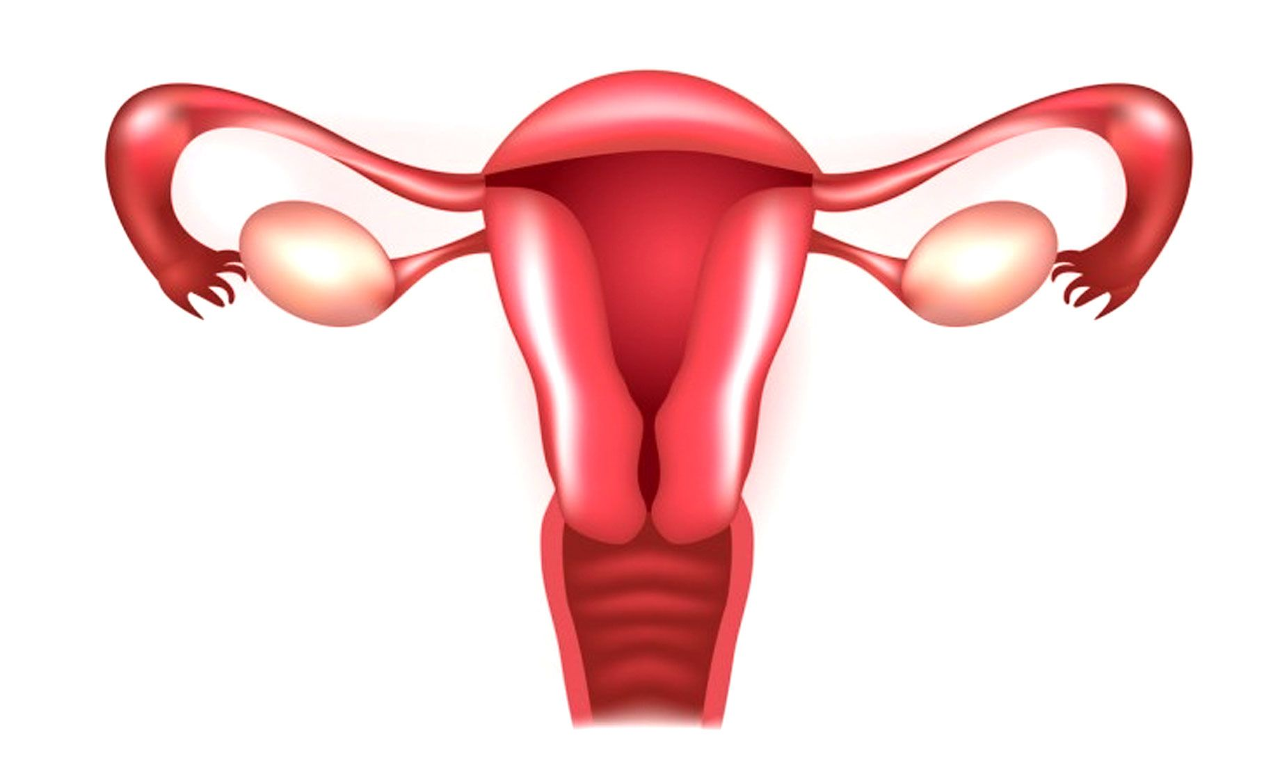 Rendering of female uterus, fallopian tubes and ovaries to help understand infertility