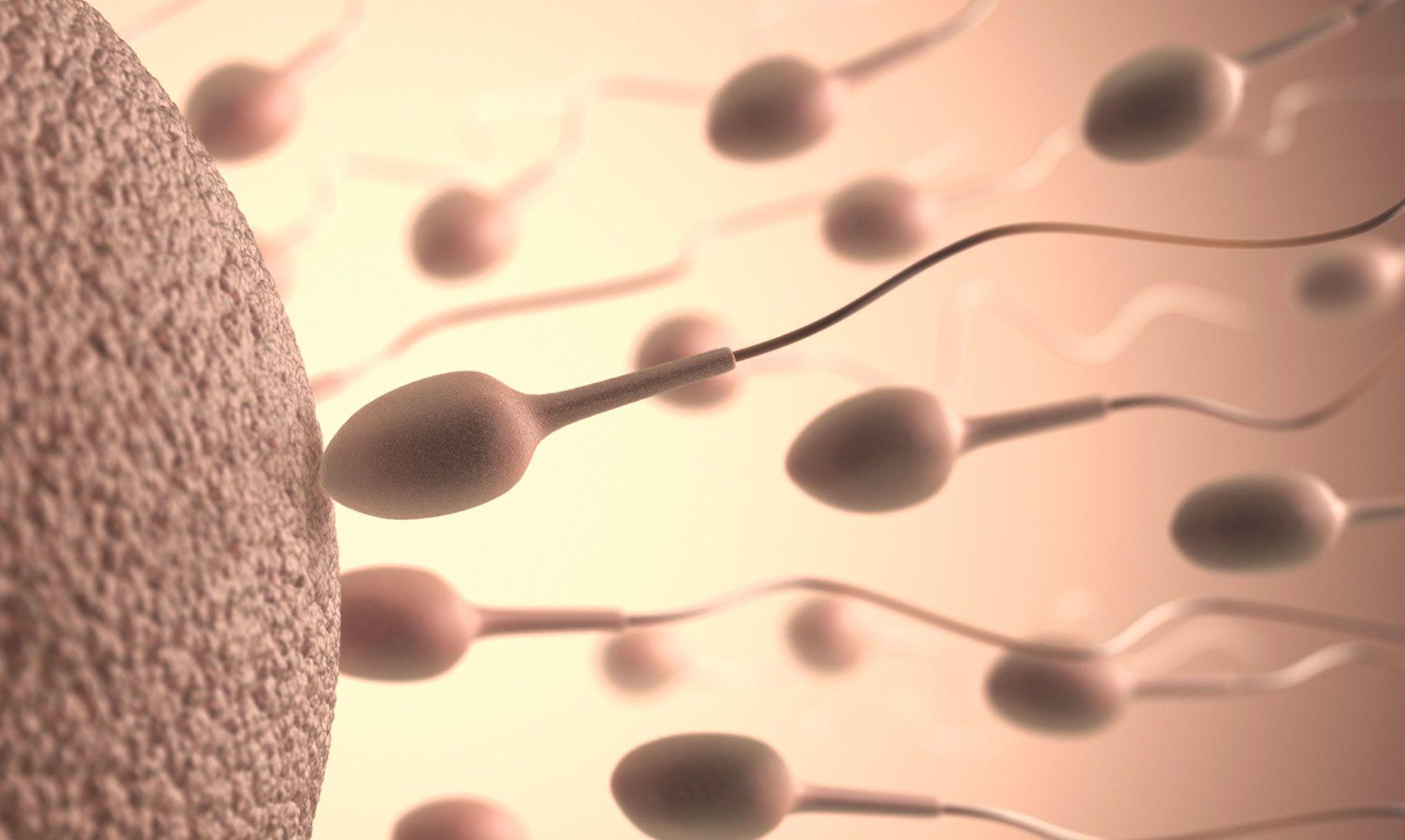 人体精子和卵子的视图
