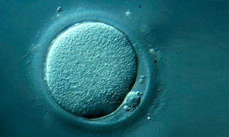 Close up view of egg produced by ovulation induction