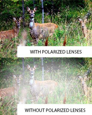 Vision comparison through polarized and non-polarized lenses.