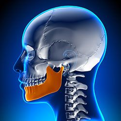 Digital illustration of a jaw as seen in profile