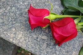 Two red roses on a gravestone