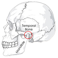 Anatomical illustration of the human skull