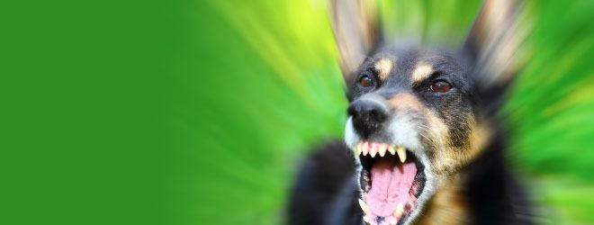 A blurred close-up of a dog baring its teeth.