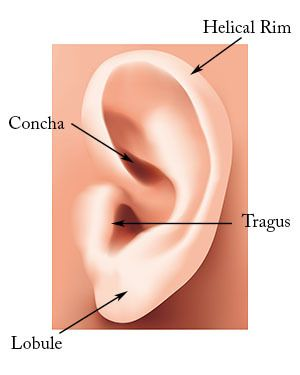 Microtia: Diagram of an unaffected ear.