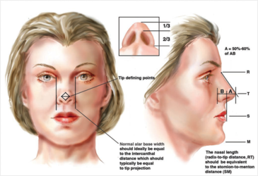 graphic of nose features