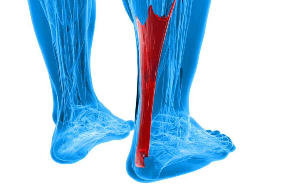 Legs with the Achilles tendon highlighted in red