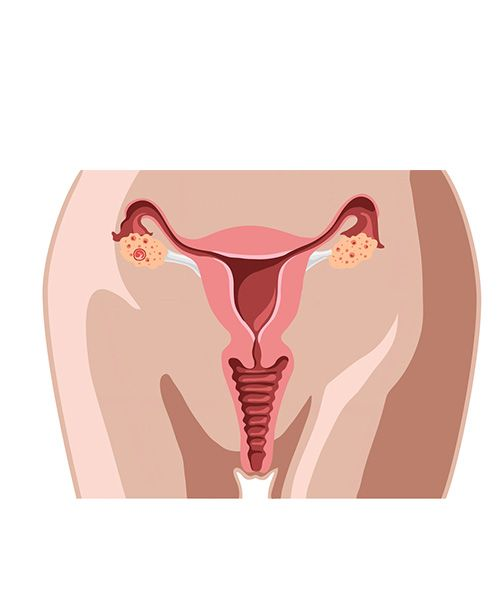 illustration of ovaries