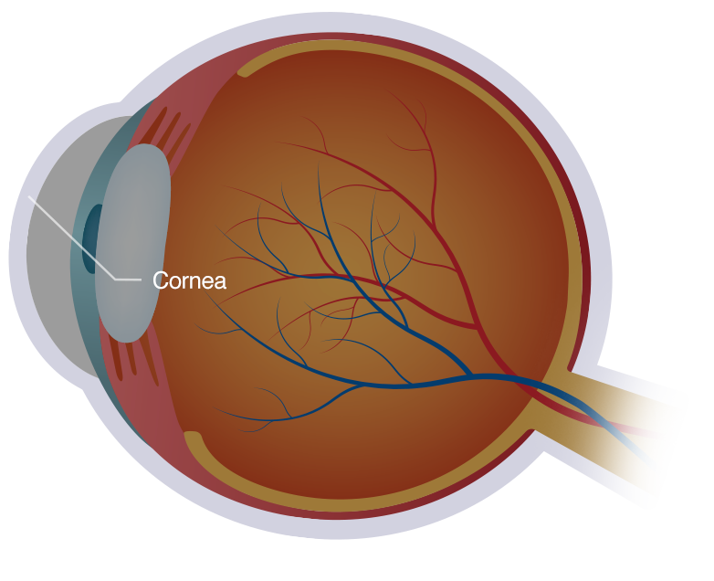 illustration of cornea