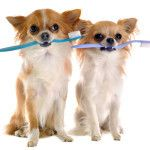 Dog-Teeth-Cleaning-Marietta-GA