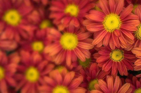 red and orange flowers