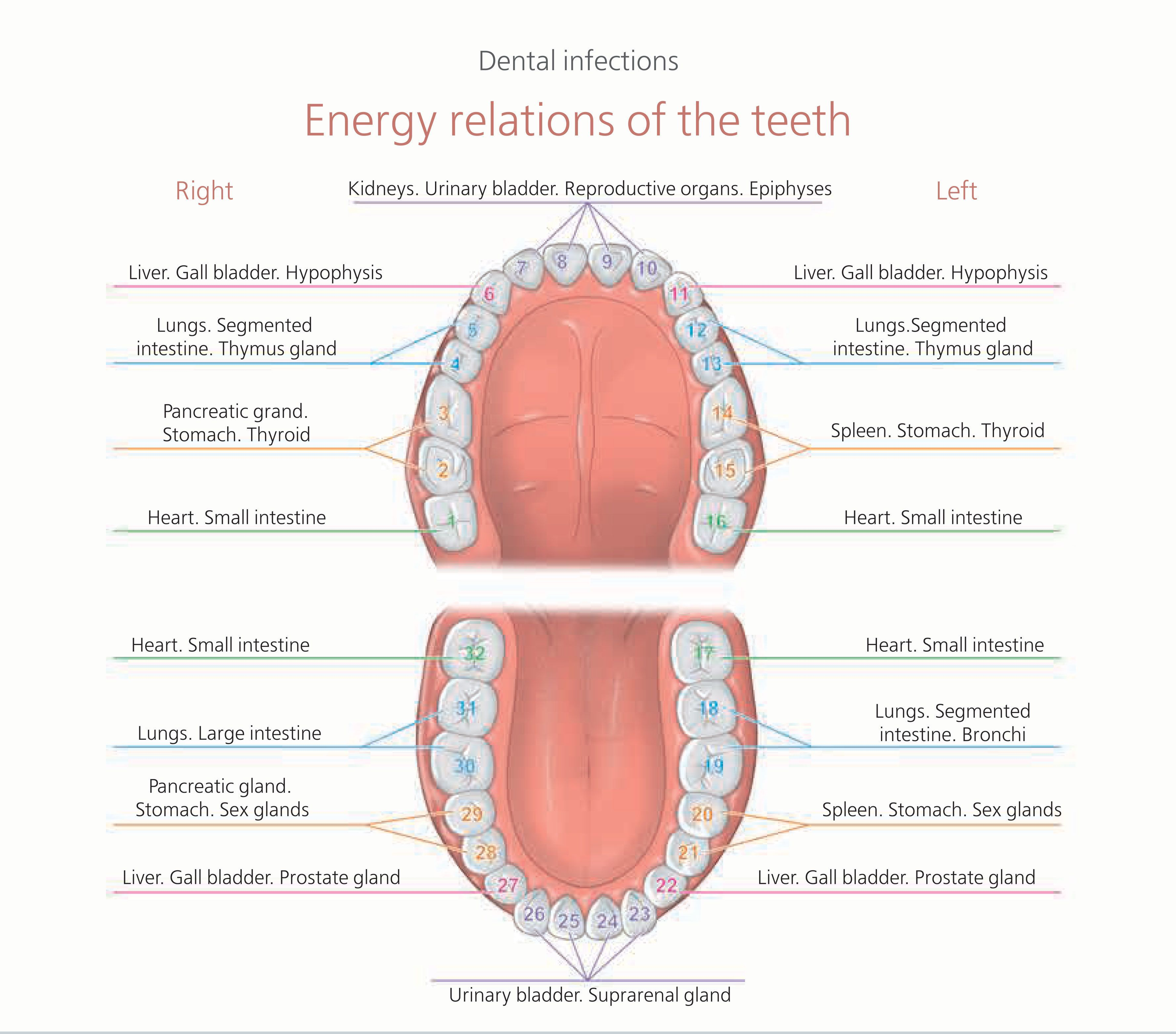 family dental chart